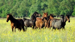 caii salbatici din padurea letera liberi