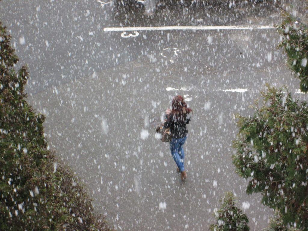 cod de ninsoare